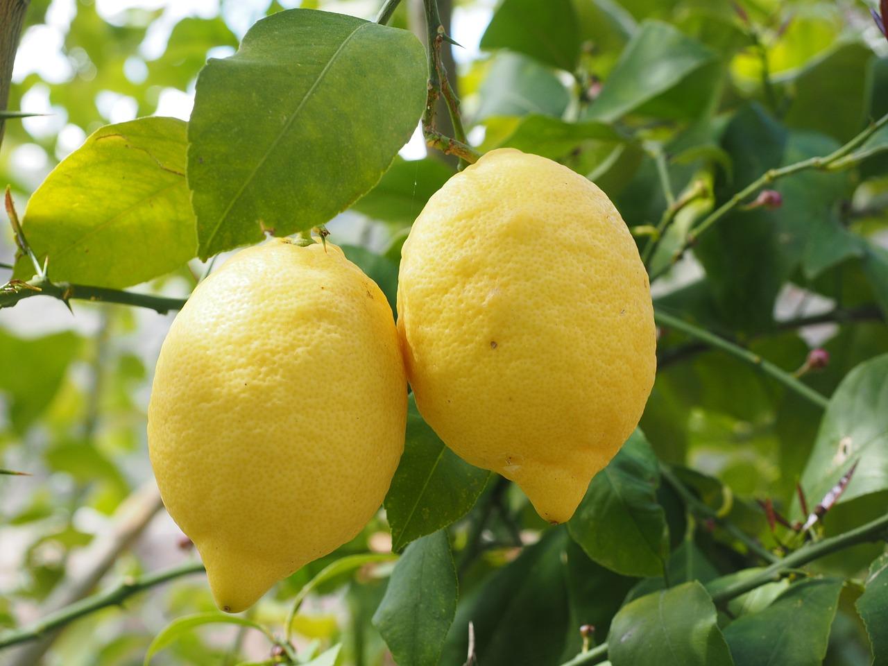 En este momento estás viendo Limón. ¿Conoces sus beneficios?